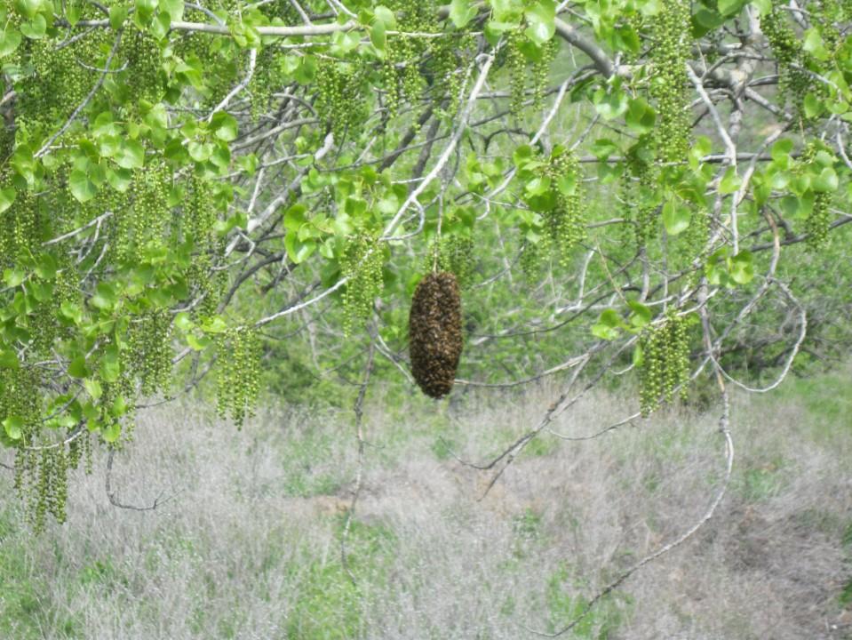 The beehive.
