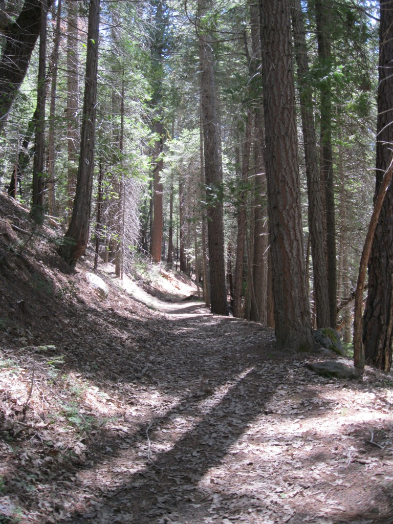 The shaded trail on the north bank of the river.