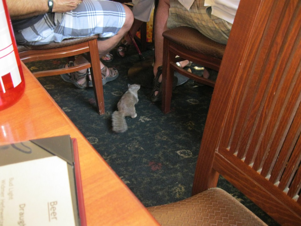 "The travelers at the next table were feeding this little guy.  Each table had a sign implying ""do not feed the animals."""