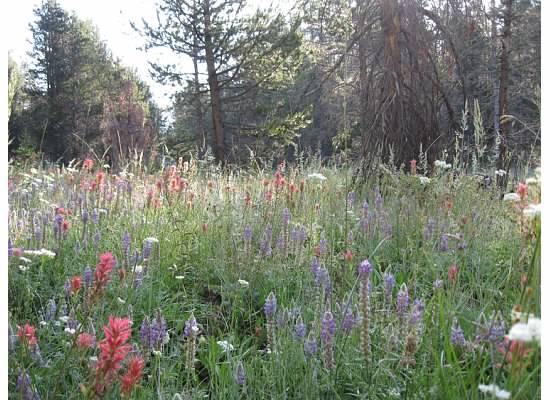 McGurk Meadow (taken August 8, 2010).