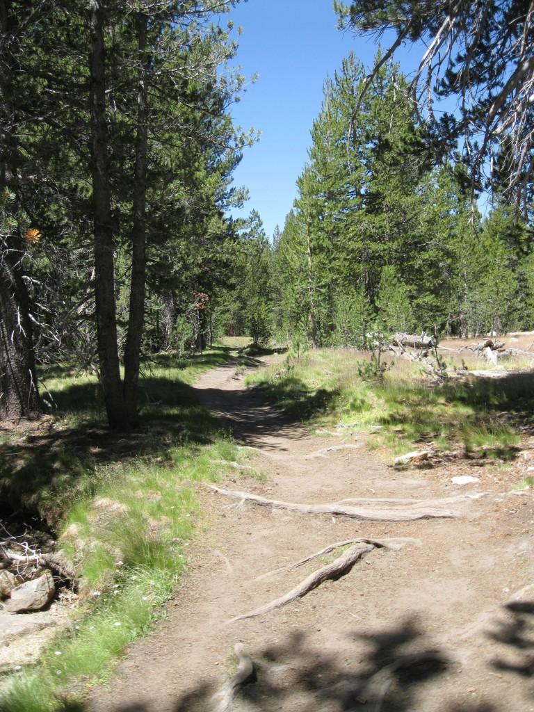 Lyell Canyon trail.