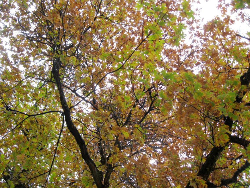 A little bit of fall colors.