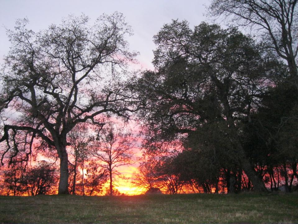 Sunset through the trees, a spectacular show each winter afternoon.