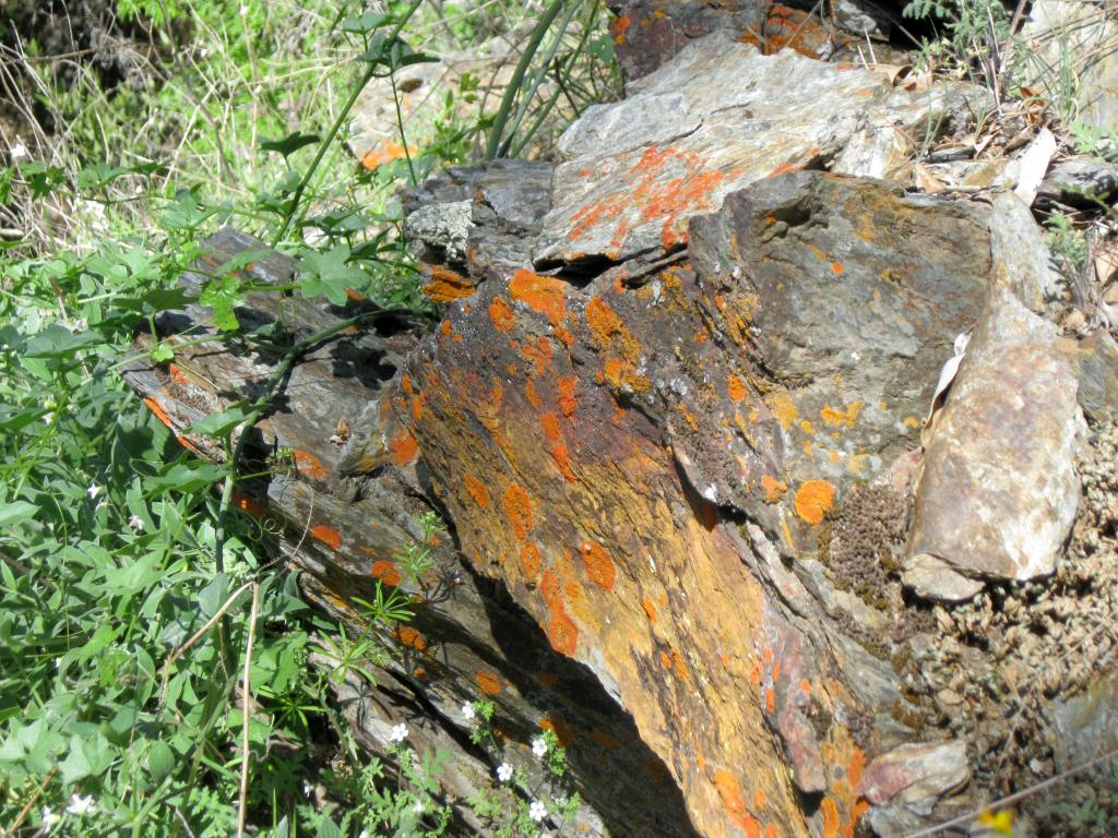 Even the poppy-colored lichen-covered rocks got into the spirit of the occasion.