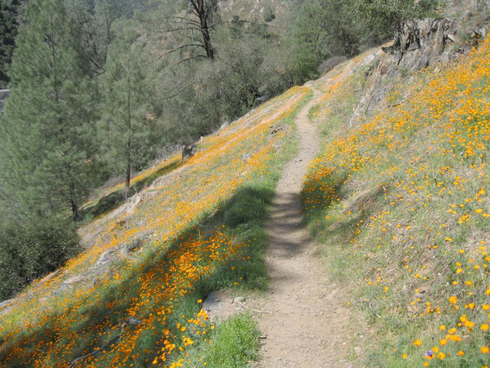 The trail through the poppy covered hillside.