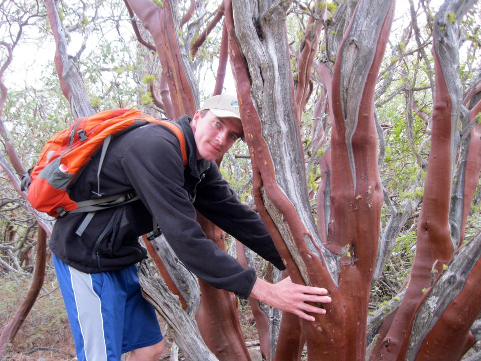 The ruby-colored trunks of manzanita bushes flanked the trail.