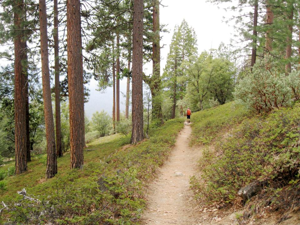 An easier section of trail.