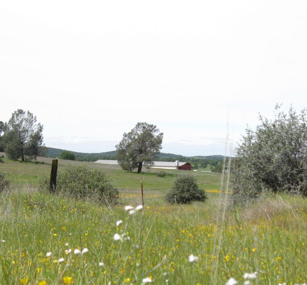 A peaceful pasture.