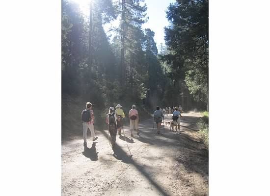 The Seniors' Hiking Group heading down the road.