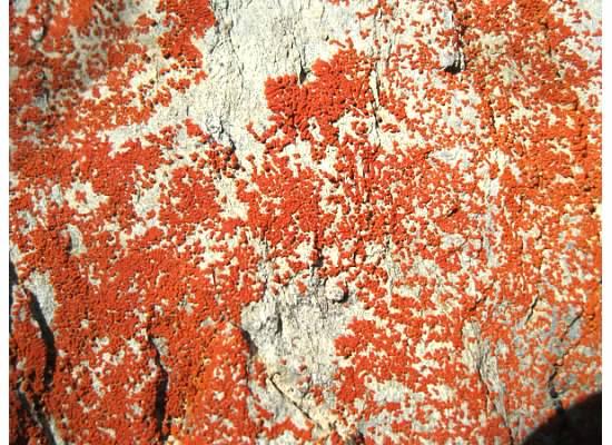 Orange on the rocks.