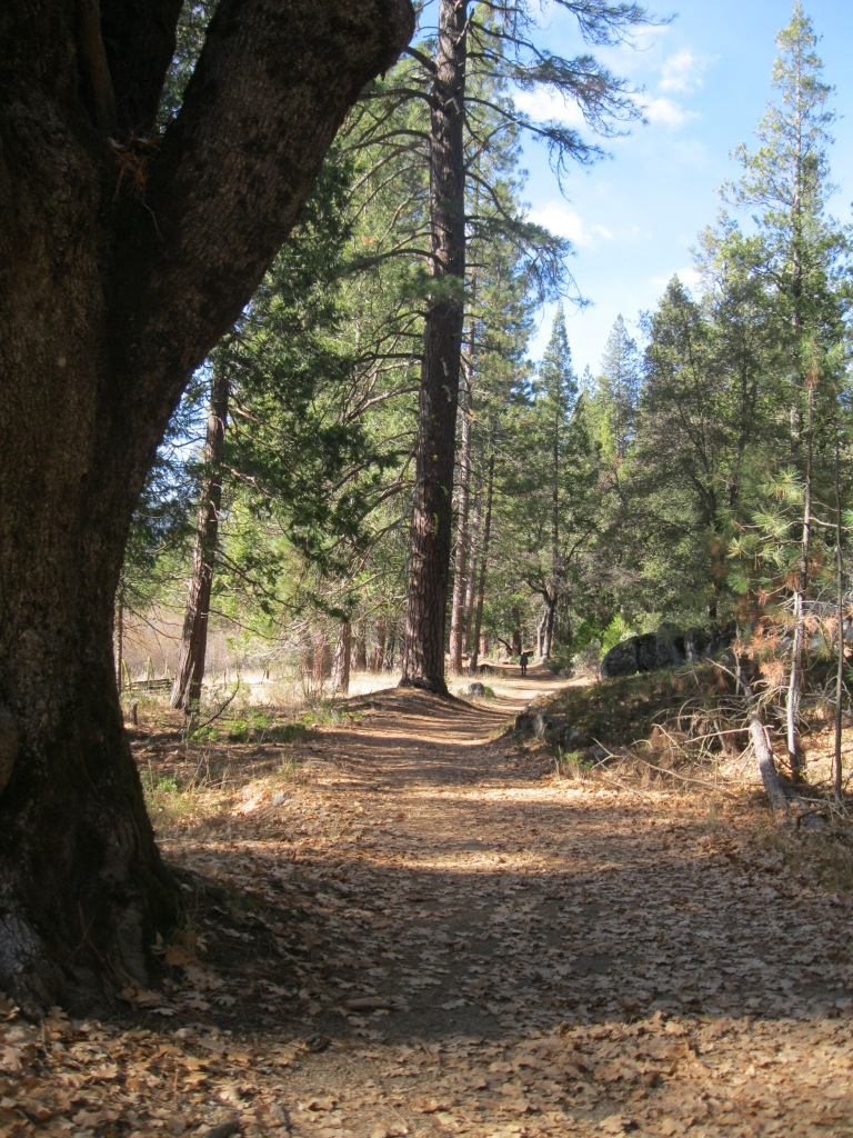 The paved route around the meadow.