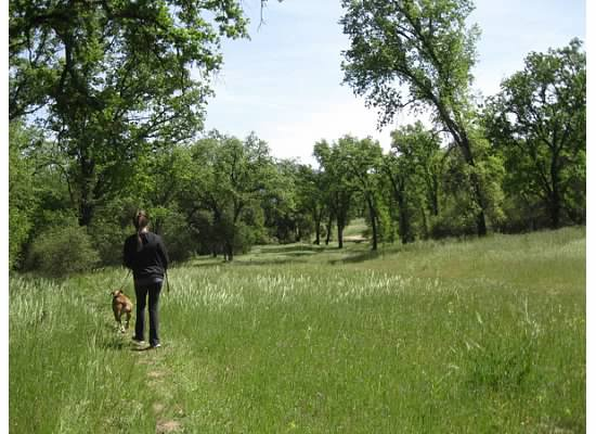 "Walking through the meadow--Ahwahnee, an Indian word means ""deep grassy valley""."