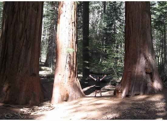 These old trees have plenty of tannin which helps keep them immune from insects and fungi.
