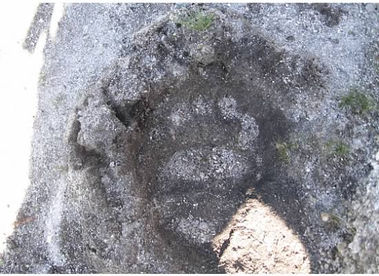 Bear prints and deer tracks were sunk deeply in the mud.  Could this be a bear print?