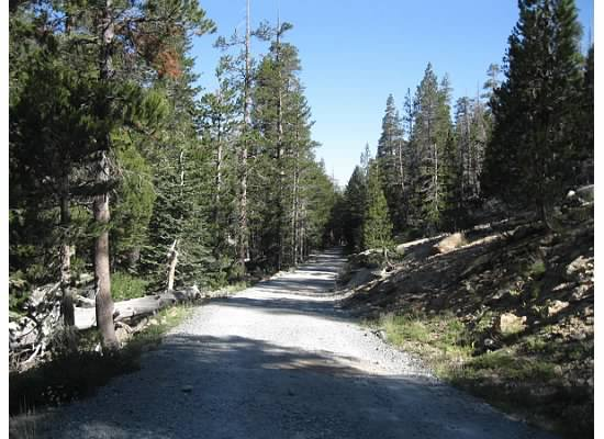 This historic road was constructed in 1882 by the Great Sierra Silver Mining Company to transport mining supplies to the mine at Tioga Hill.