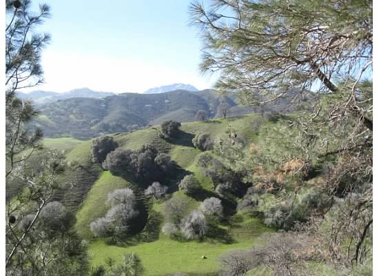 The green rolling hillside was a sight to see with the gray oak trees.