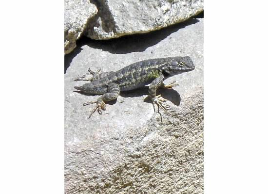 The hikers who passed me were fascinated with the lizard.