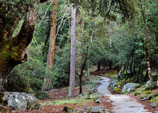Four Mile Trail, Glacier Point, Union Point, Yosemite
