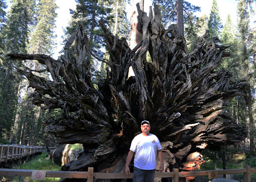 Fallen Monarch, Mariposa Grove, Yosemite National Park
