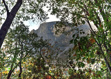 Half Dome through the trees.
