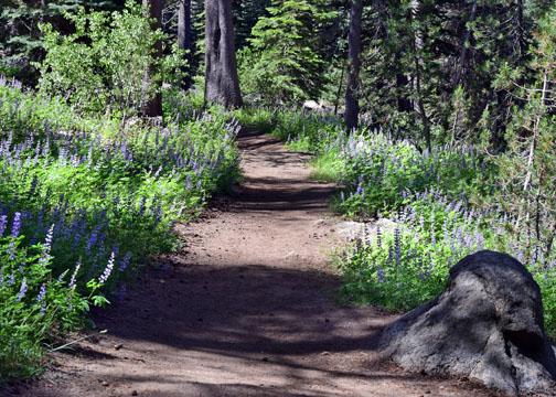 Loaded with lupine.